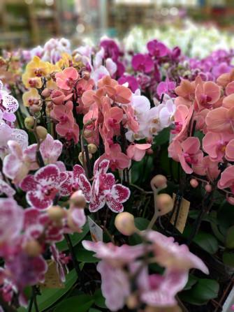 Varese Orchidea 2020
