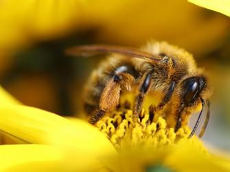 La valle dei dadi e il polline magico