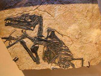 Cene e il Parco Paleontologico