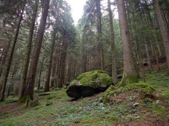 Il bramito del cervo e l'antico altare dei druidi