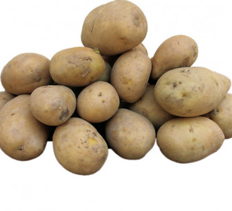 Patata di Cencerate