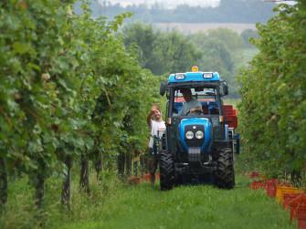 Degustazione guidata dei migliori vini Citari.