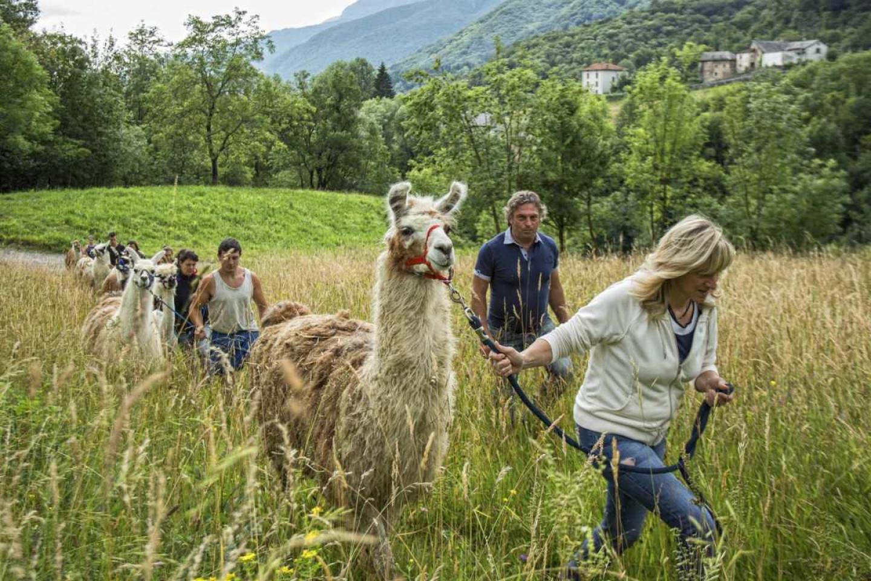 Passeggiate coi lama alla Scuderia della Valle