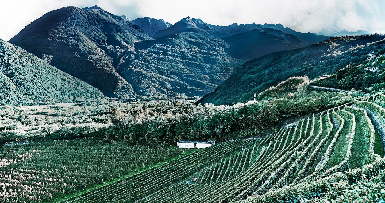 Vista della via dei Terrazzamenti e le montagne di Sondrio