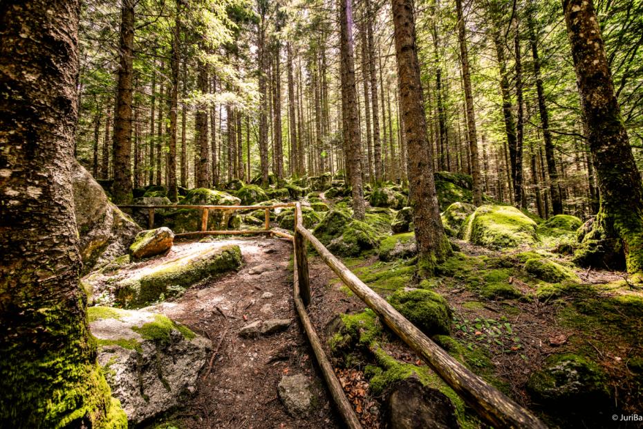 Foresta dei Bagni di Masino - le Termopili (SO) - 26/07/2020 - EVENTO SCADUTO