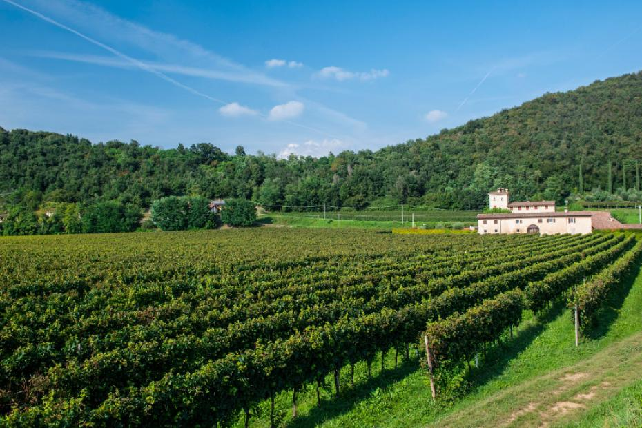 Walks among wine cellars of Franciacorta and vineyard tasting sessions
