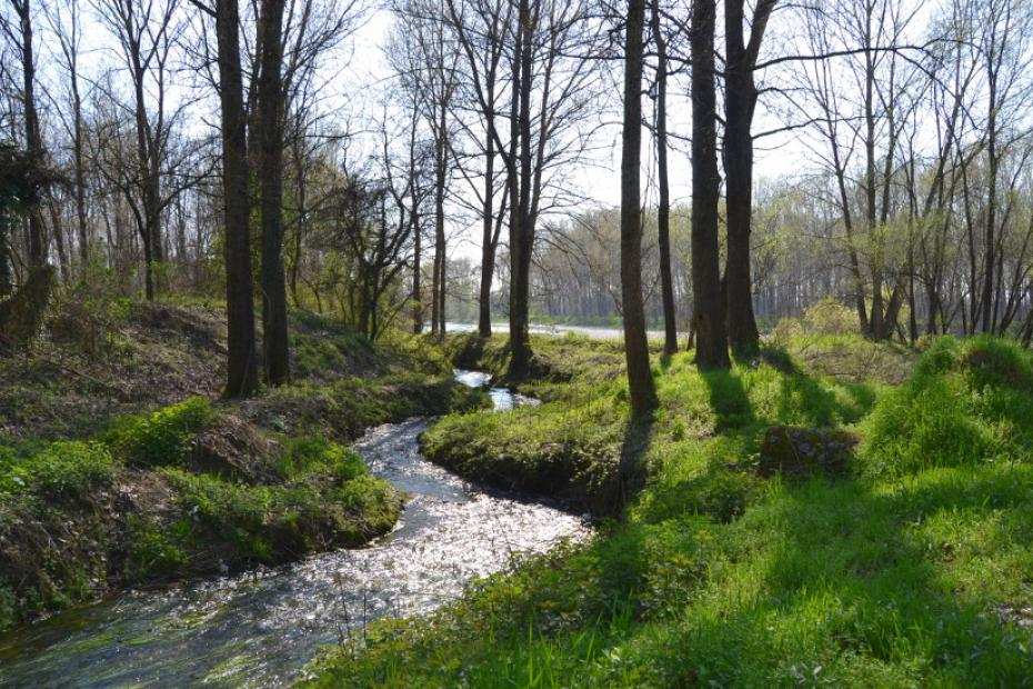 Trekking or Cycling along the shores of the Oglio river
