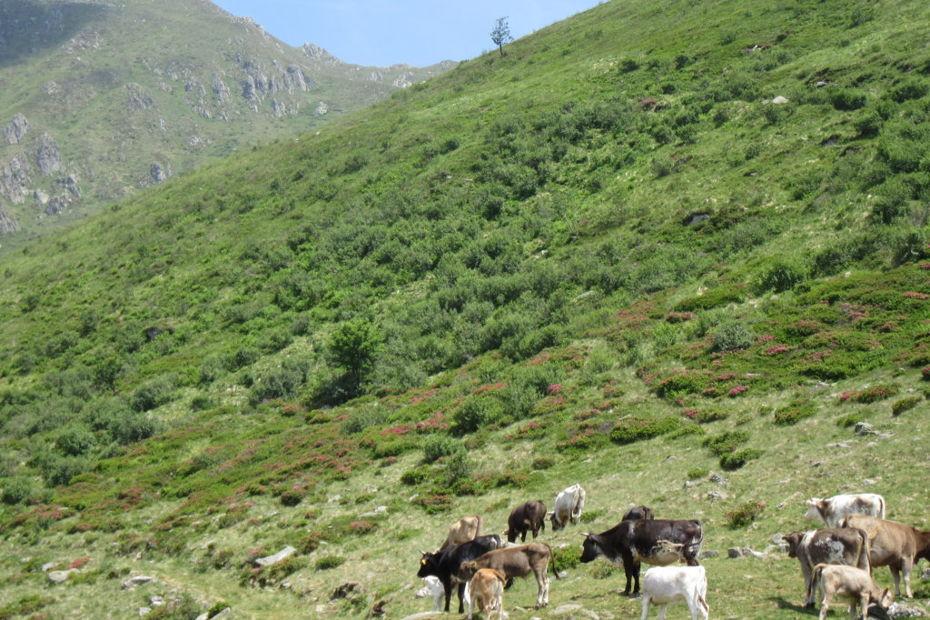 Alpeggi in Val Cavargna