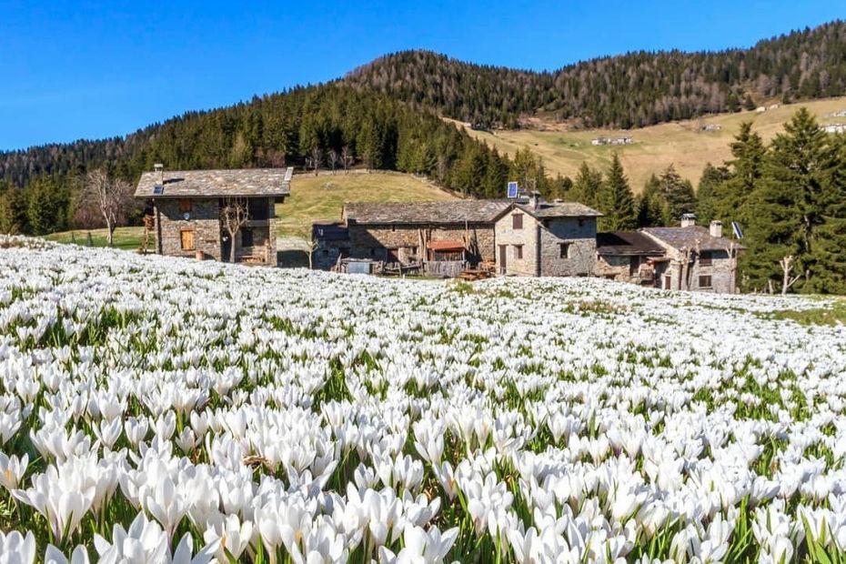 Fioriture in Valtellina