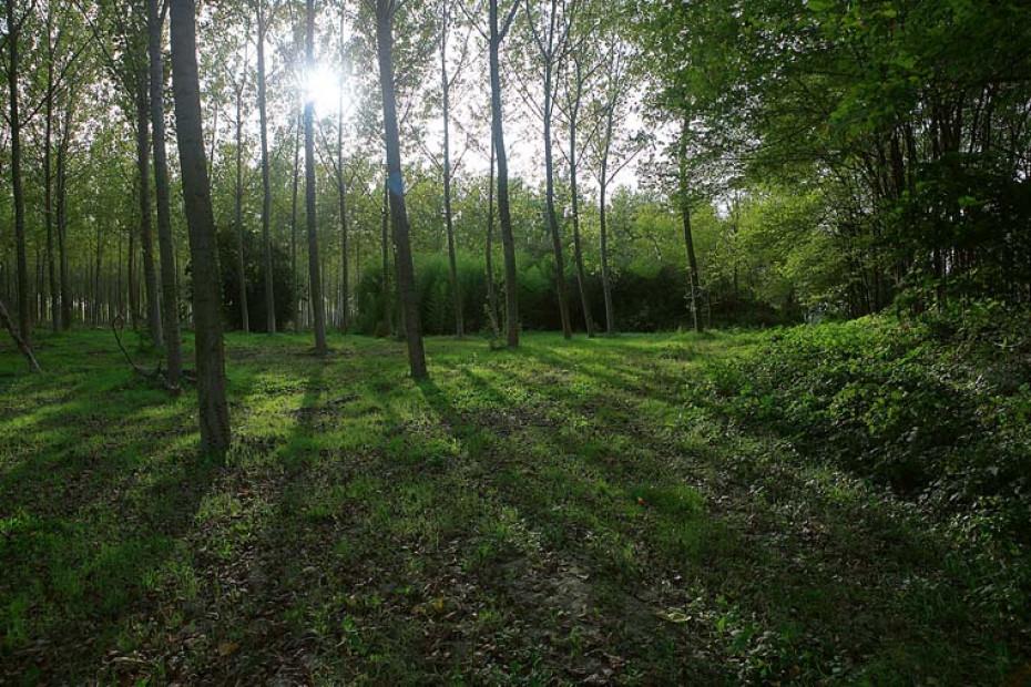 La 'Grande Foresta tra i due fiumi'