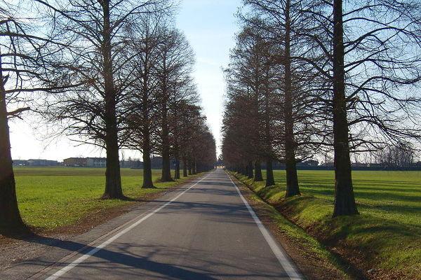 Viale d'accesso a Gradella, Pandino (CR)