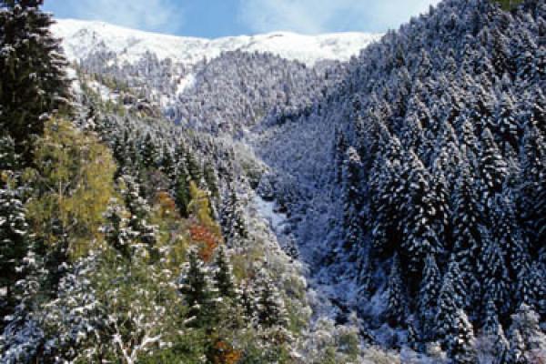 Alpe Leveia